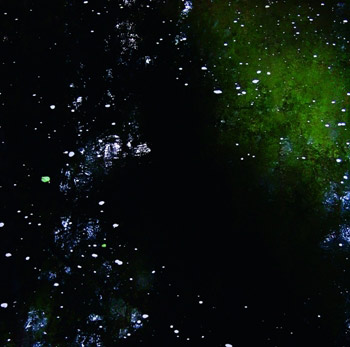 The starry night essay